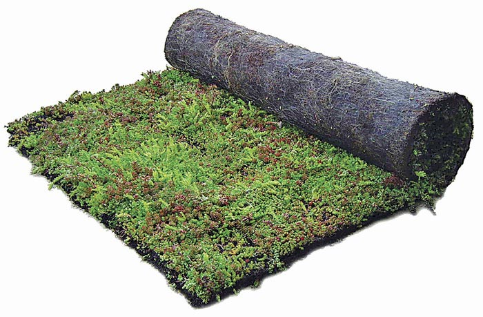 tapis-plants-in-mat (1)